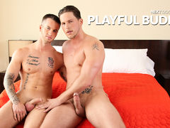 Playful Companions